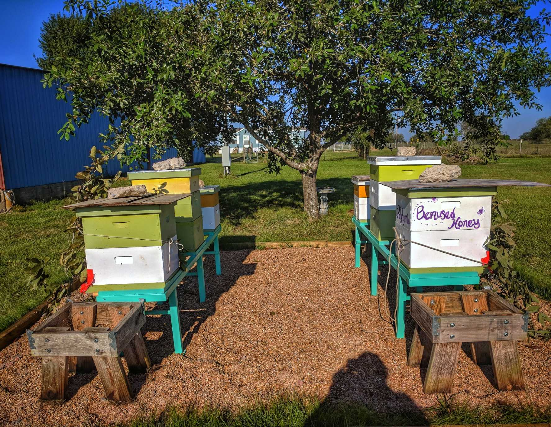 The honey bee hives in the bee yard keep the hives togerther.