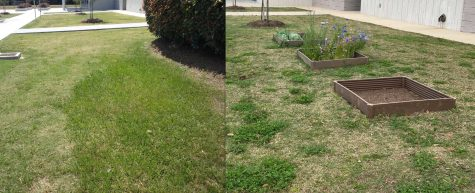 Before and after the garden was planted