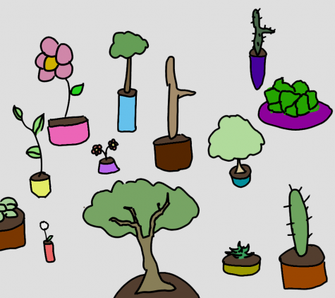 A large group of potted plants
