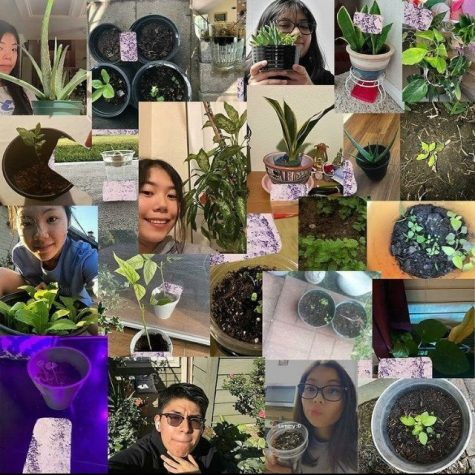 Photosynthesizers Zoom meeting